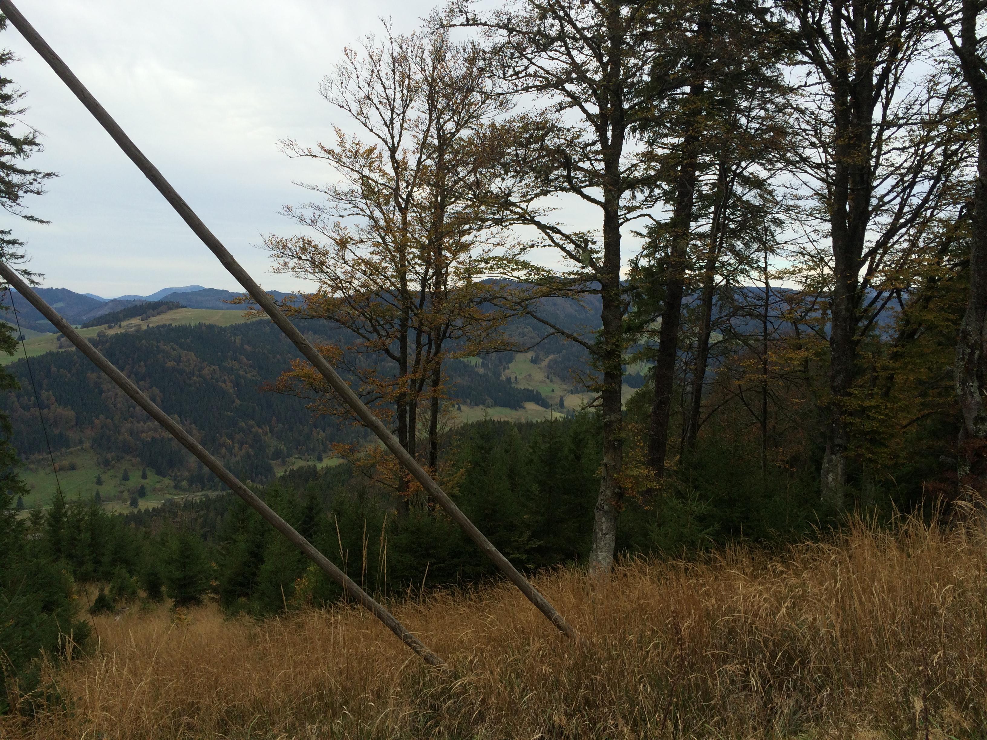 hütte im schwarzwald