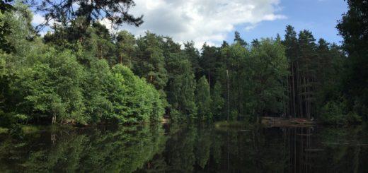 am Stausee in der Dresdner Heide